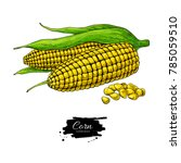 corn hand drawn vector... | Shutterstock .eps vector #785059510