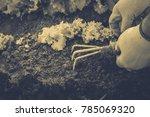 gardening  weeding weeds....   Shutterstock . vector #785069320