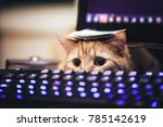 Stock photo ginger cat near the computer keyboard closeup 785142619