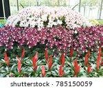 modern orchid garden design   Shutterstock . vector #785150059