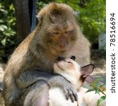 monkey and domestic cat  ... | Shutterstock . vector #78516694