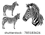 Graphical Set Of Zebra Isolate...