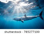shark diving in the sea of... | Shutterstock . vector #785277100
