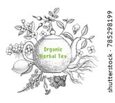 herbal tea vector illustration. ... | Shutterstock .eps vector #785298199