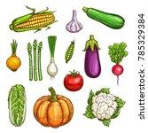 vegetable sketches set of fresh ... | Shutterstock .eps vector #785329384