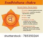 svadhisthana chakra infographic.... | Shutterstock . vector #785350264