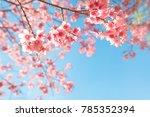 beautiful sakura flower  cherry ... | Shutterstock . vector #785352394