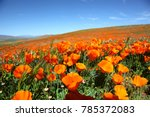 california poppy super bloom | Shutterstock . vector #785372083