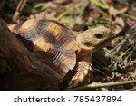 african spurred tortoise at... | Shutterstock . vector #785437894