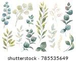 hand drawn watercolor set green ... | Shutterstock . vector #785535649
