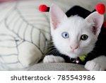 the white odd eyes cat in the... | Shutterstock . vector #785543986