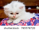 Stock photo photo persian white kitten cute lonely time friend and is a member of the cat family 785578720