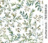 botanical illustration.... | Shutterstock . vector #785588416