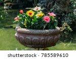 bright red flower of hibiscus ... | Shutterstock . vector #785589610