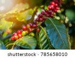 100  organic arabica coffee... | Shutterstock . vector #785658010