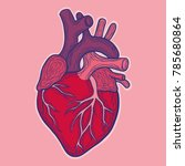 hand drawn vector anatomic... | Shutterstock .eps vector #785680864