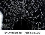 spider webs close up   Shutterstock . vector #785685109