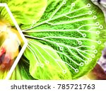 synthetic photosynthesis  ... | Shutterstock . vector #785721763