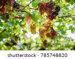 fresh grape fruit. | Shutterstock . vector #785748820