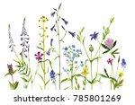 watercolor drawing wild plants...   Shutterstock . vector #785801269