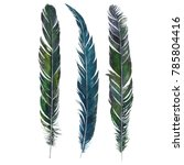 watercolor drawing feathers... | Shutterstock . vector #785804416