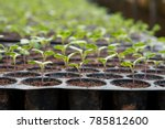 Young Plants In Nursery Plastic ...