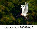 jabiru stork  jabiru mycteria ...   Shutterstock . vector #785826418