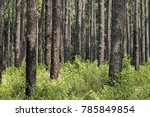 a forest with vegetation in a... | Shutterstock . vector #785849854