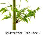 tropical green fresh bamboo... | Shutterstock . vector #78585208