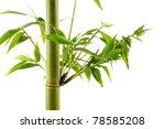 tropical green fresh bamboo... | Shutterstock . vector #78585208