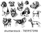 graphical set of dogs isolated... | Shutterstock .eps vector #785957398