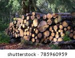 chopped wood logs for sale use... | Shutterstock . vector #785960959