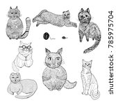 hand drawn sketch style.cats... | Shutterstock .eps vector #785975704