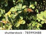 a garden swarming with bees. | Shutterstock . vector #785993488