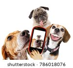 Stock photo cute beagle looking at the camera while taking a selfie with another beagle and a pug on isolated 786018076