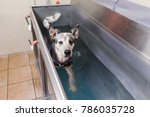 picture of an australian... | Shutterstock . vector #786035728
