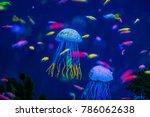 Aquarium Of Jellyfish  Fish ...
