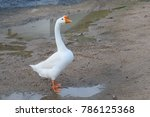 white goose with orange beak | Shutterstock . vector #786125368