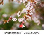 branch of blossoming cherry... | Shutterstock . vector #786160093