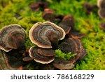 High Quality Tree Fungus...