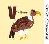 vector of cute english alphabet ... | Shutterstock .eps vector #786204874