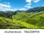 nice view of tea plantation... | Shutterstock . vector #786208954