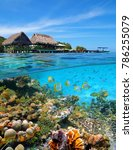 a tropical restaurant with... | Shutterstock . vector #786255079