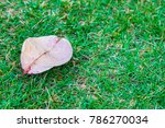 leaves on ground copy space | Shutterstock . vector #786270034