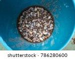 rhinoceros beetle. nasty insect.... | Shutterstock . vector #786280600