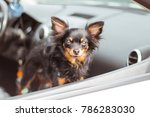 dog in car window. funny... | Shutterstock . vector #786283030