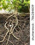 Underground Tree Root