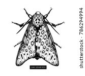 giant leopard moth hand drawn... | Shutterstock .eps vector #786294994