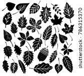 leaves  acorn black silhouettes ... | Shutterstock . vector #786315370