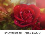 red rose in dew drops. summer... | Shutterstock . vector #786316270